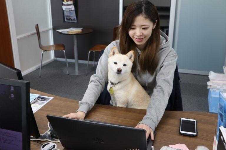 イメージ図/犬連れ出勤制度とは??
